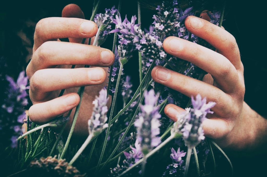 Hands touching plants