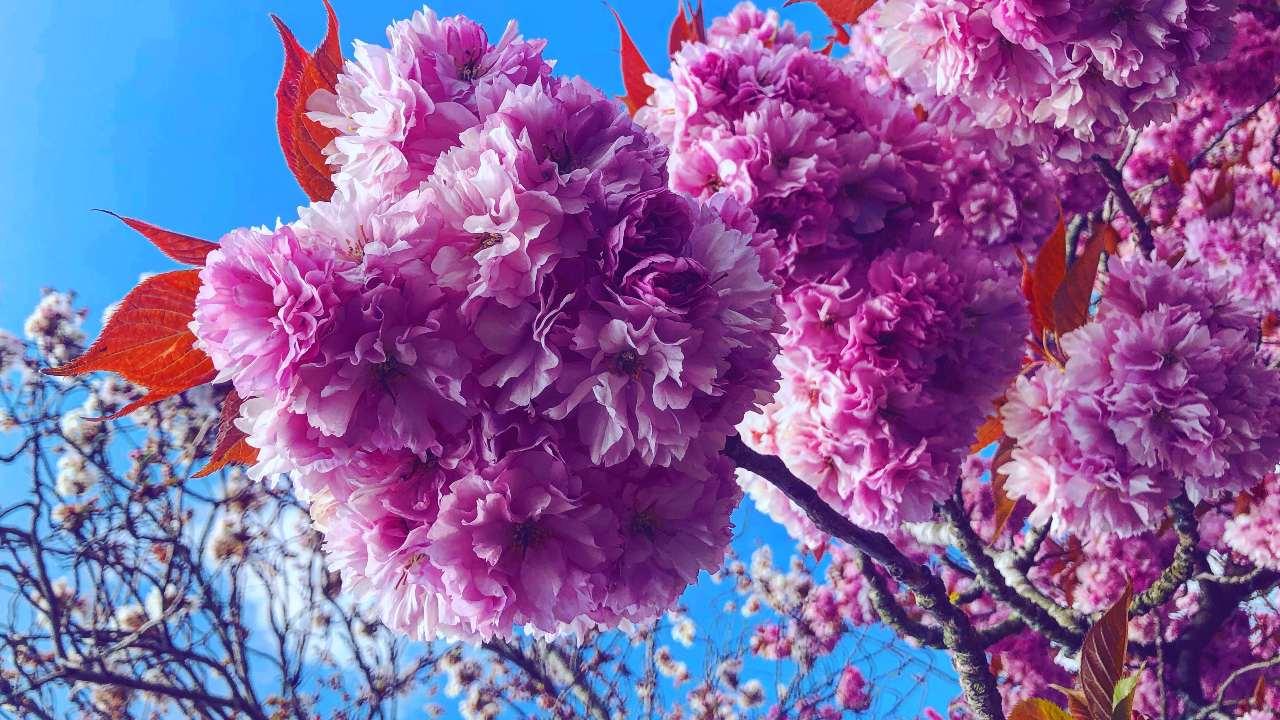 Living seasonally Spring Blossom