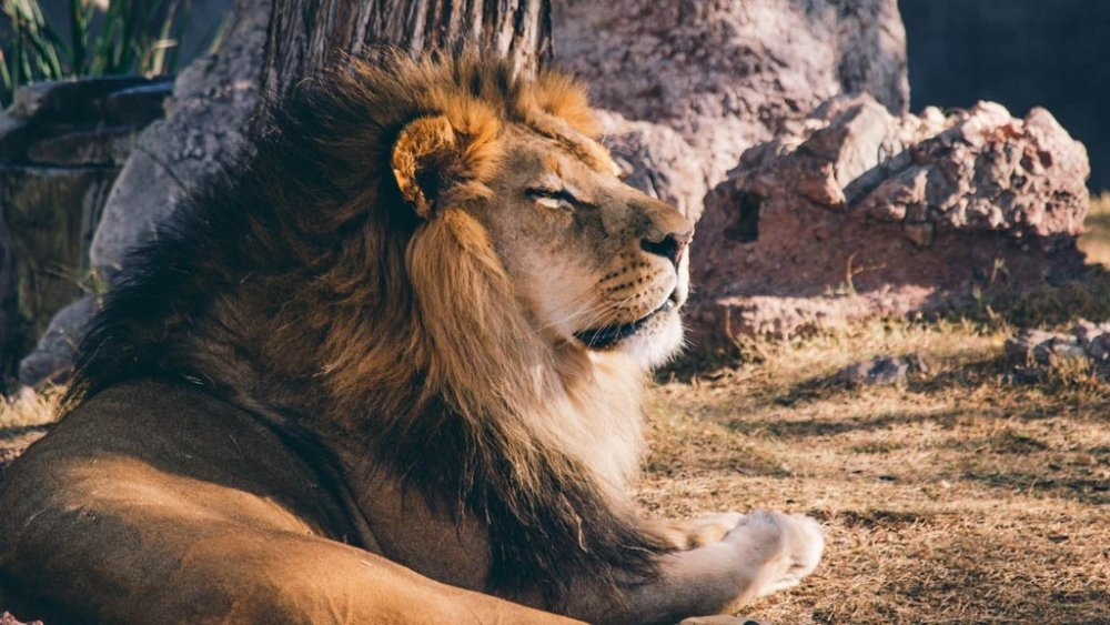 Self Love and the Inner Lion